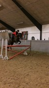 Hest til salg - SADY