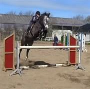 Hest til salg - SCHOUWSGAARDENS HEART FIGHT