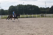 Hest til salg - LAURA DAMKÆR
