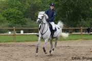 Hest til salg - RYELINGS REGENT
