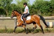 Hest til salg - FIRELLI