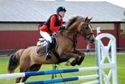 Hest til salg - Hamiltons Shine a Light