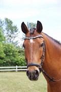 Hest til salg - Vognmandgårdens Valentin