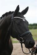 Hest til salg - Kaspian Dyrhave
