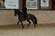 Hest til salg - VIVA LA VIDA 6
