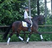 Hest til salg - LUPIN STENSVANG