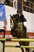 Hest til salg - RAABJERGS URBAN
