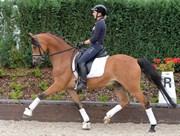 Hest til salg - FAIRYTALE