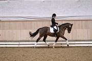 Hest til salg - Leredo hoppe