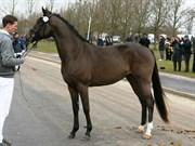 Hest til salg - STEMAR'S MALVIN