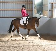 Hest til salg - UNICORN´S KARISMA