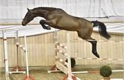 Hest til salg - 12 - BØGEGÅRDEN GLADIOLA