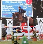 Hest til salg - Dynamic