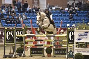 Hest til salg - HOLMGAARD´S CASSIANO