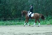 Hest til salg - LUCSWOLLE´S SUNNY