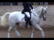 Hest til salg - Nikita