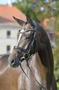 Hest til salg - HØJGAARDENS MISS UNIQUE