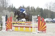 Hest til salg - TIRS PRIDE