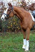Hest til salg - HEYWOOD AF LYKKEBO