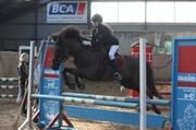 Hest til salg - ÆKPARA