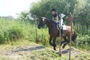 Hest til salg - CORINNA