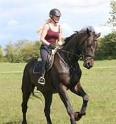 Hest til salg - LE FIGARO