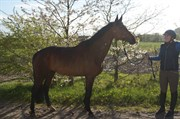 Hest til salg - HJORTH'S LE'STELL