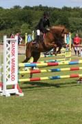 Hest til salg - HORSMARKS DIVA DUCHESS