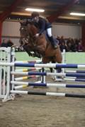 Hest til salg - VANINE H