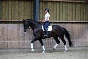 Hest til salg - Stald Werther Deluca