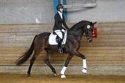 Hest til salg - LUSIANNA