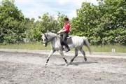 Hest til salg - LILLE STARUPHØJ S SASSI