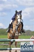Hest til salg - Goldman