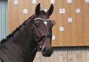 Hest til salg - KOSMO