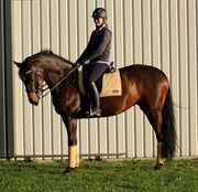 Hest til salg - KROGÅRDENS MUSSE