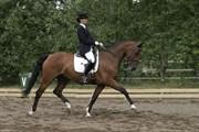 Hest til salg - COUNTESS