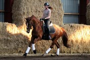 Hest til salg - COSMOPOLITAN