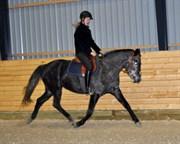 Hest til salg - SPRINGERS MEGAN
