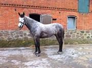 Hest til salg - LODENWIJK I