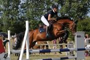 Hest til salg - GAIO-VITZ