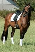 Hest til salg - AAGREEN'S MINGUS
