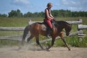 Hest til salg - SKOVLUNDS FLYING NAZGÛL