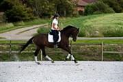 Hest til salg - Go2 Daimiel