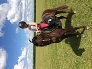 Hest til salg - JACKSON