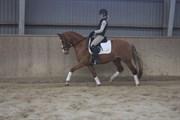 Hest til salg - LYSGAARDS J´ADORE