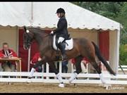 Hest til salg - SKOVLY'S ALANTA