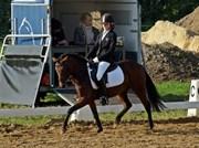 Hest til salg - KIRKEGÅRDSMINDE MARTHA