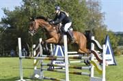 Hest til salg - CALIBRO
