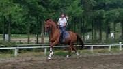 Hest til salg - HOELGAARD´S AMARONE
