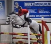 Hest til salg - VIVA